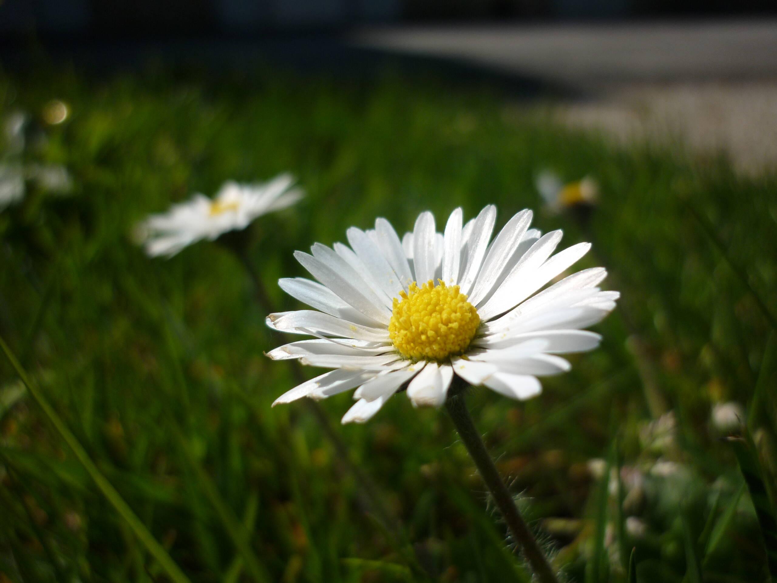 Concours photo : la nature à Surgères!