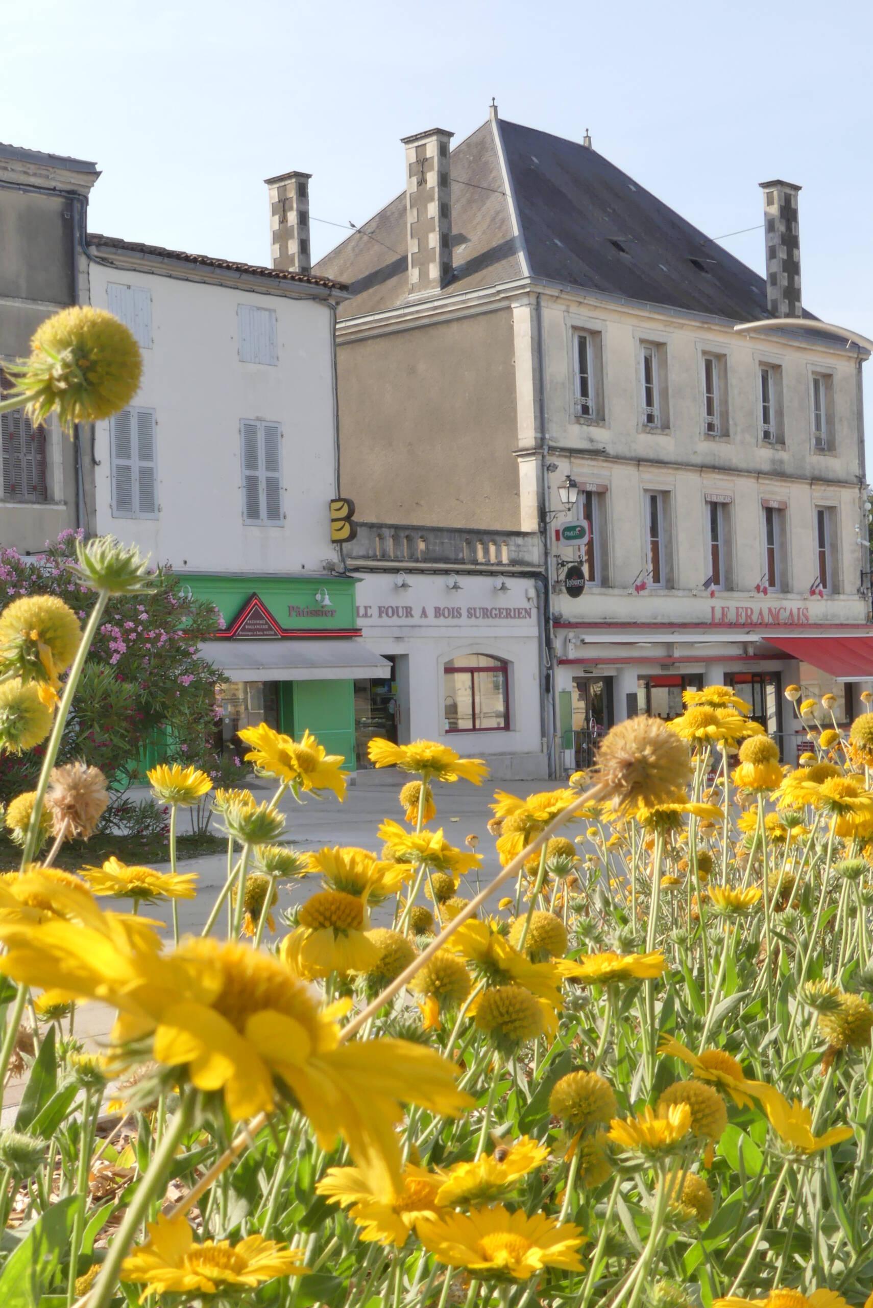 Un permis de végétaliser pour embellir la ville